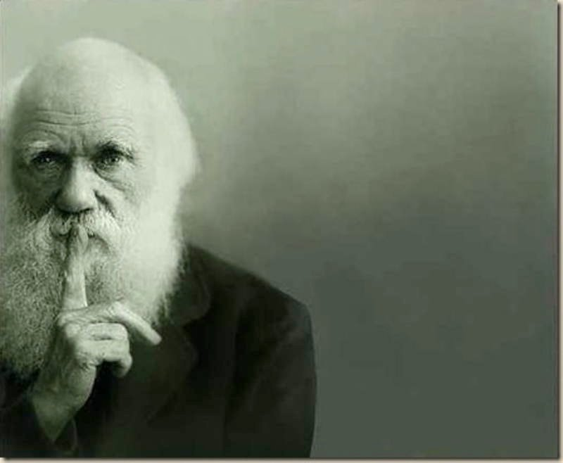Bumblebee Facts Darwin
