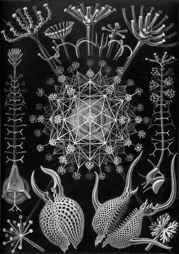 Plankton House Diatom Engraving