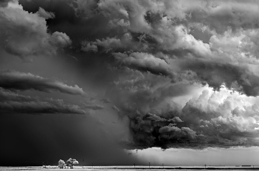 Mitch Dobrowner Lonely Tree