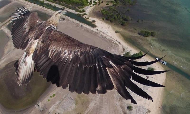 Winner of International Drone Photography Awards
