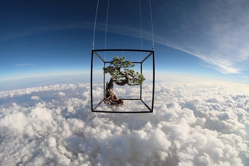 Astounding Bonsai in Space
