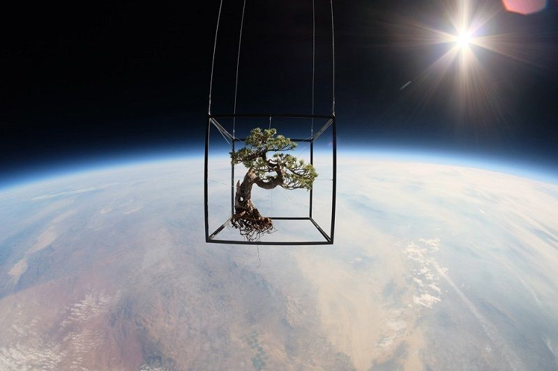 Bonsai Suspended in Space