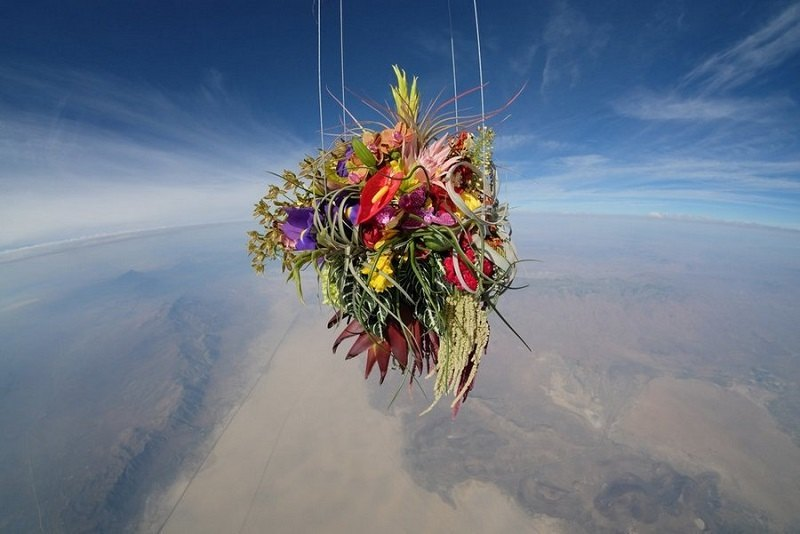 Flower Artist Send Plants into Space