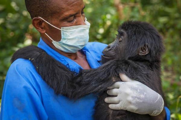 Gorilla Doctors Embrace