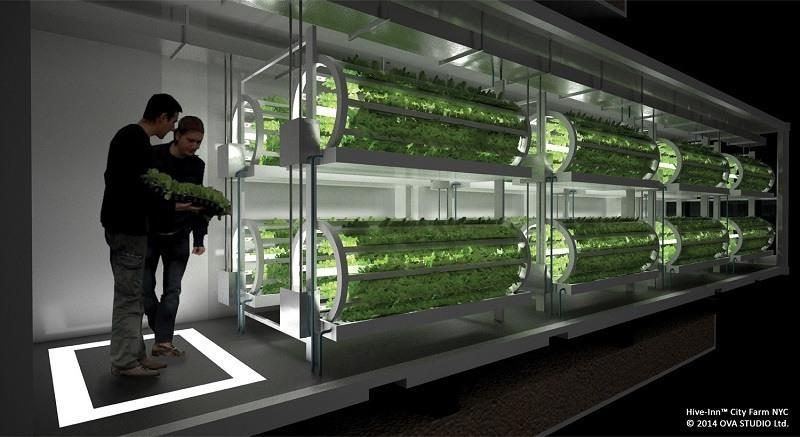 Hive-Inn Farming