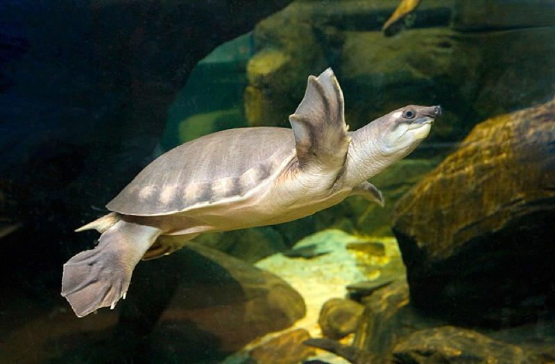 Pig Turtle Tank