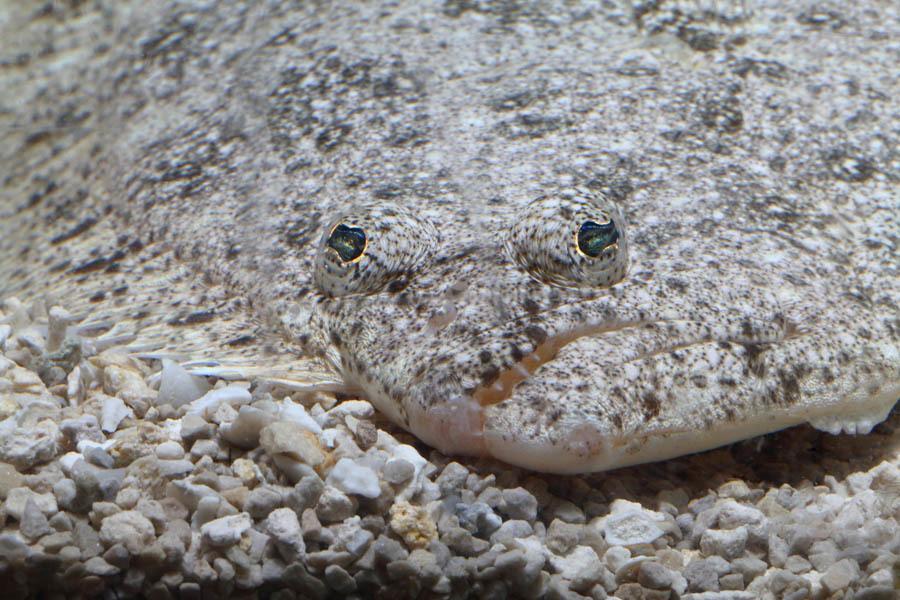 Fish On Rocks