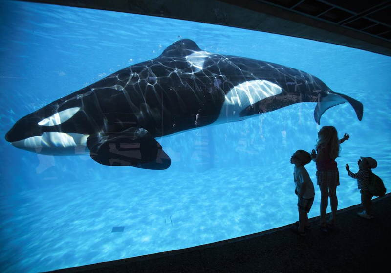 Worst Ways To Die Captive Orca