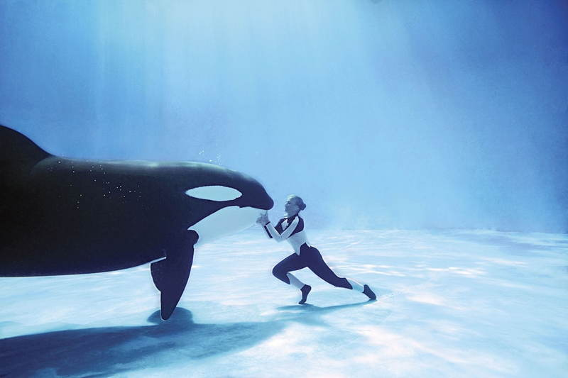 Orca with Trainer