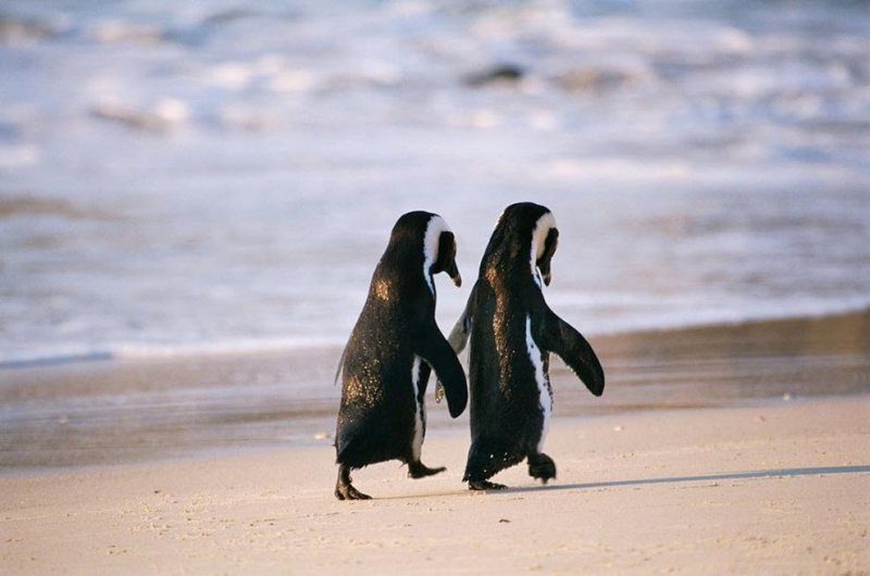 Penguin Friends on Beach