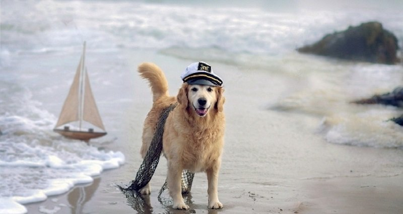 Sailor Pup on the Beach