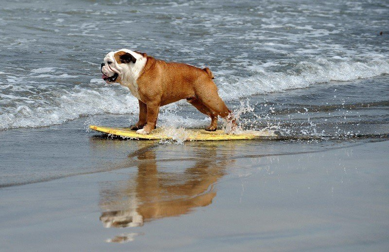 Adorable Animals Surfing