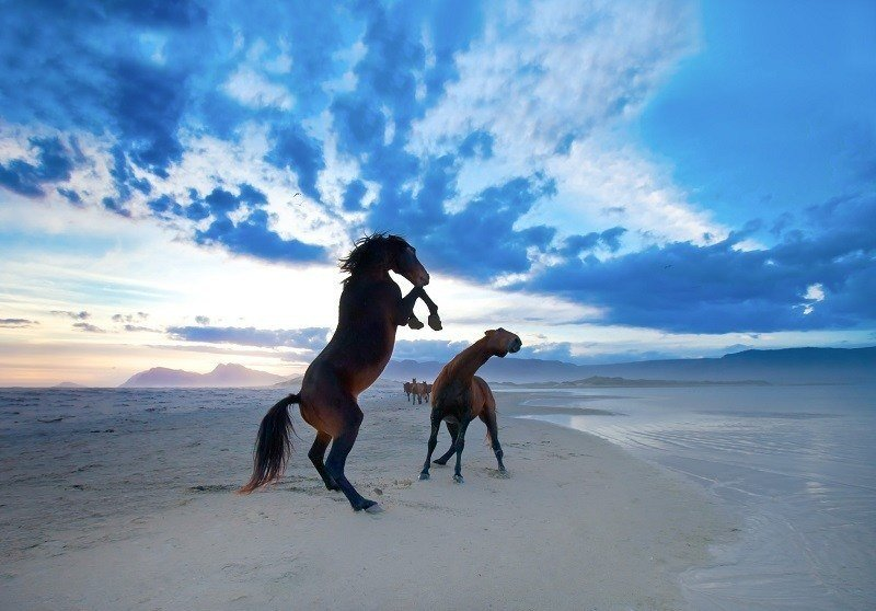 20 animals on the beach who love summer more than you wild horses on beach publicscrutiny Gallery