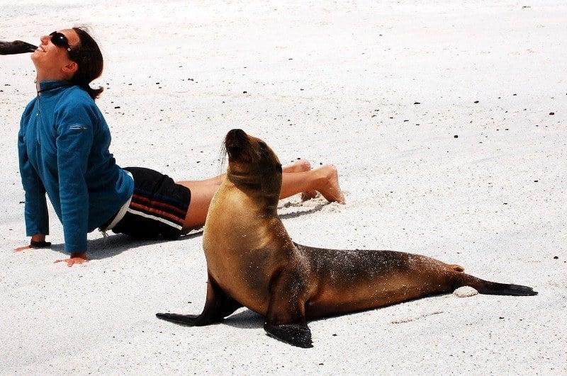 Seal Doing Yoga on Beach