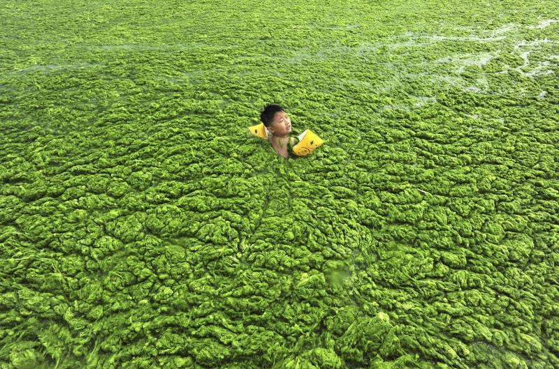 Boy Swimming In Algal Blooms