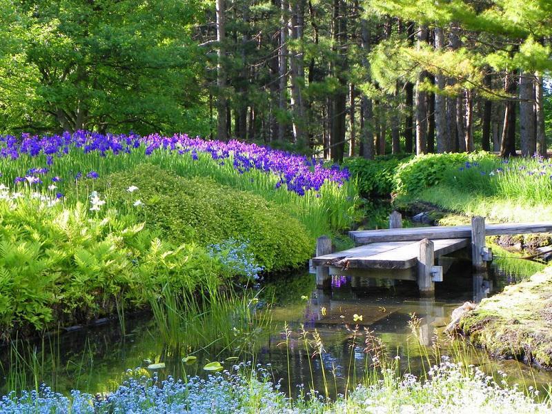 Iris in Gardens in Montreal