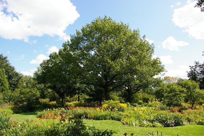 Trees in Montreal Botanical Garden