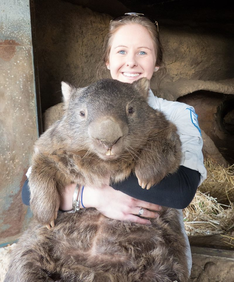 Oldest Wombat Smile