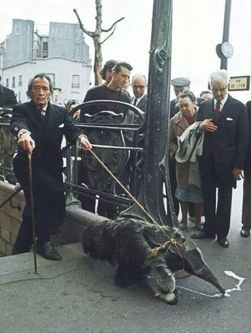 Salvador Dali Anteater Photo