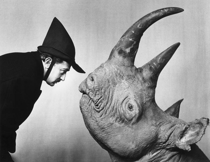 Salvador Dali Meets A Rhino