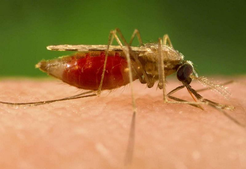 Scary Diseases Mosquito