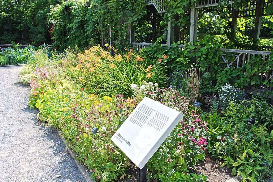 Useful Plants Garden