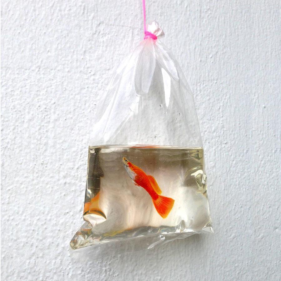 Fish In Bag