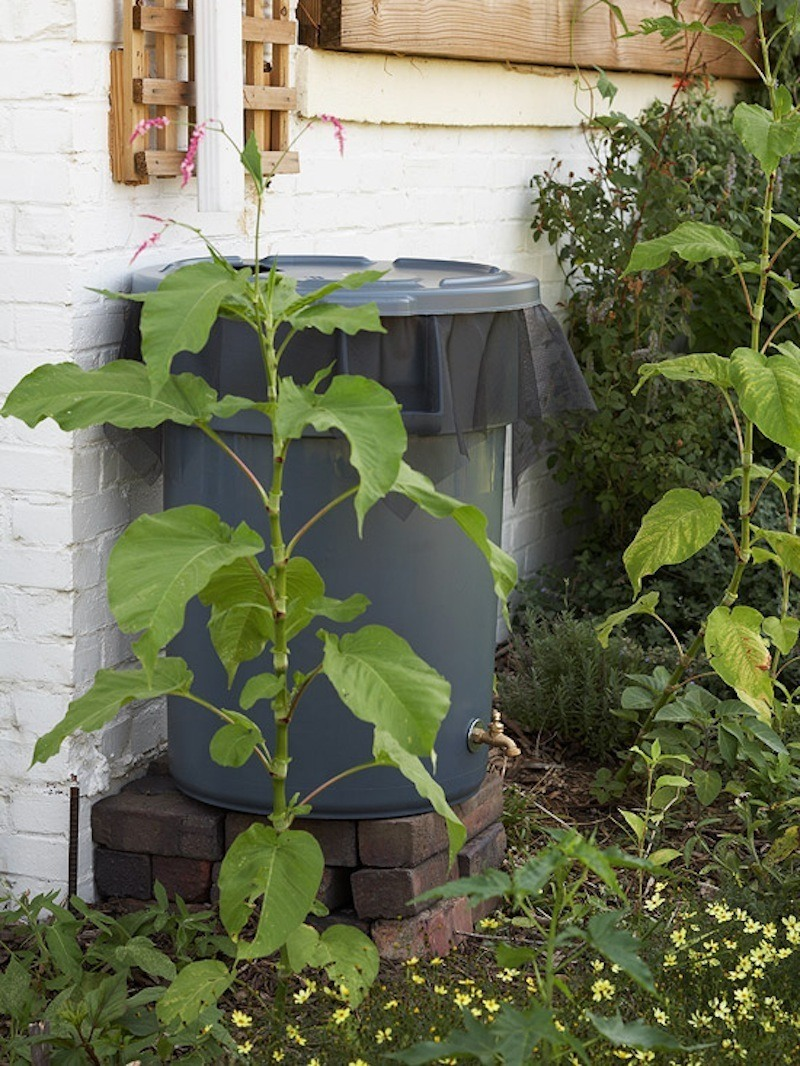 Build a rainwater collection system in your backyard for Build your own rain collection system