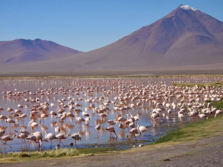 Flamingos In Desert