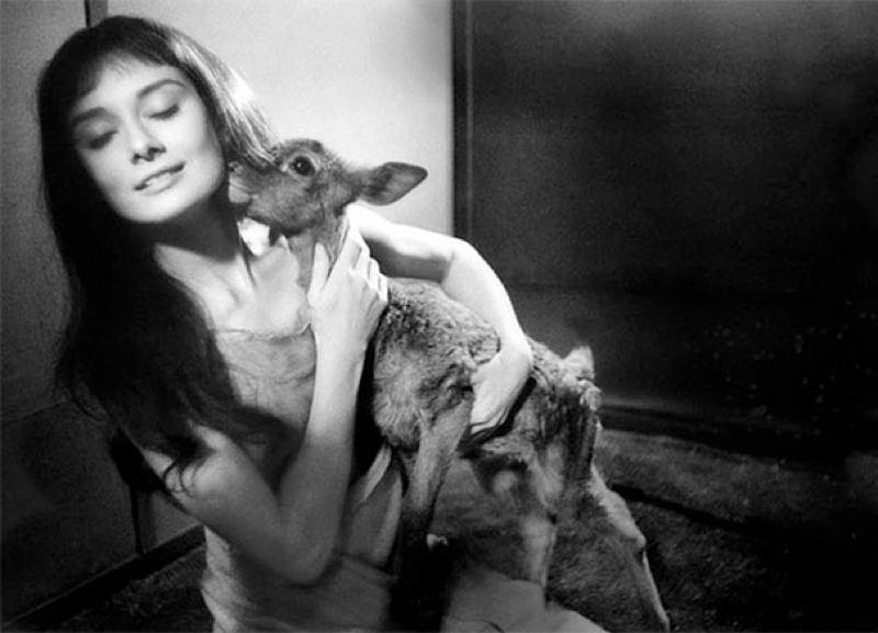 Audrey Hepburn Deer
