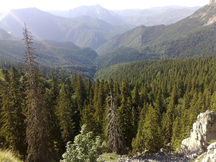 Bosnia Forest