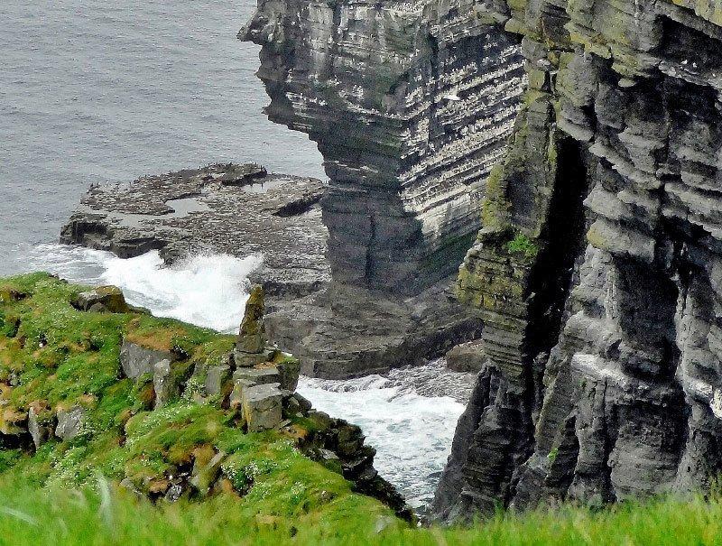 Nesting Birds on Cliffs