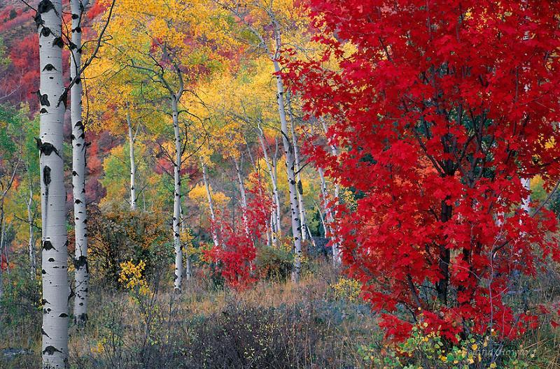 Boise in Autumn