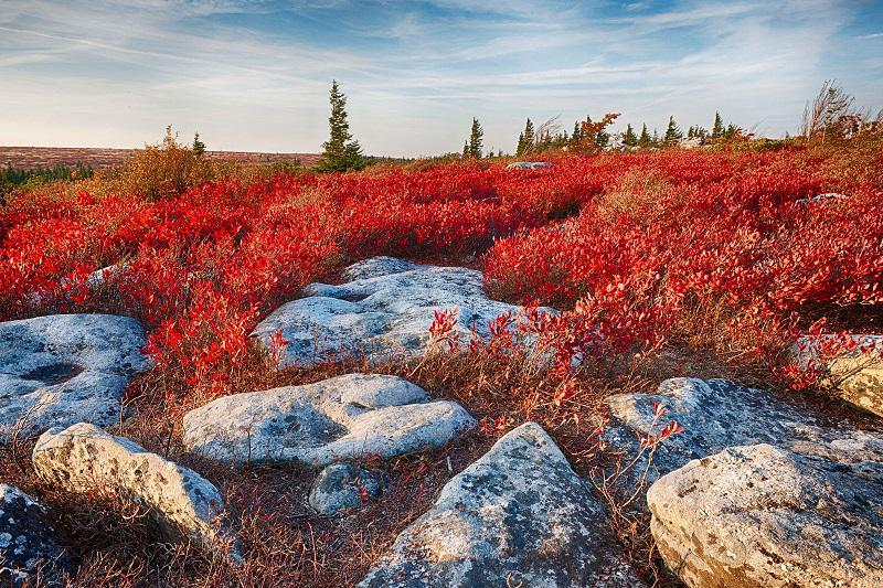 Colorful Fall Photos Ground Cover