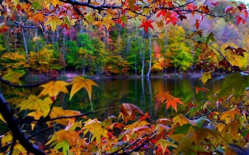 Photos of Autumn Leaves
