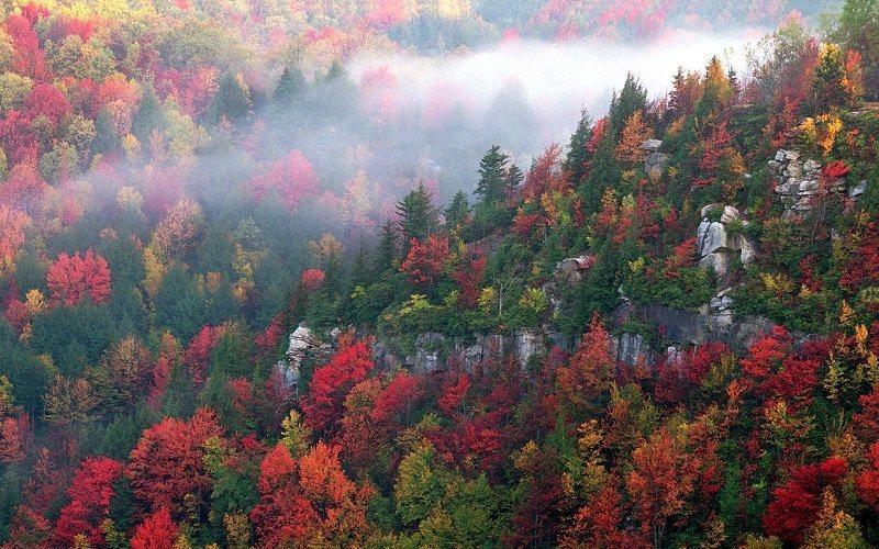 Colorful Fall Photos of Blackwater Canyon