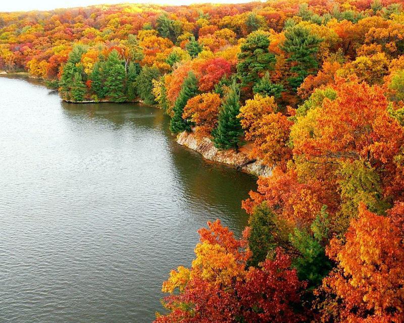 Colorful Fall Trees Near Lake