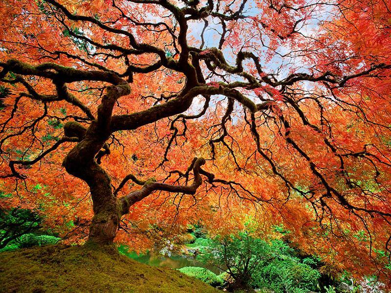 Autumn in Portland, Oregon