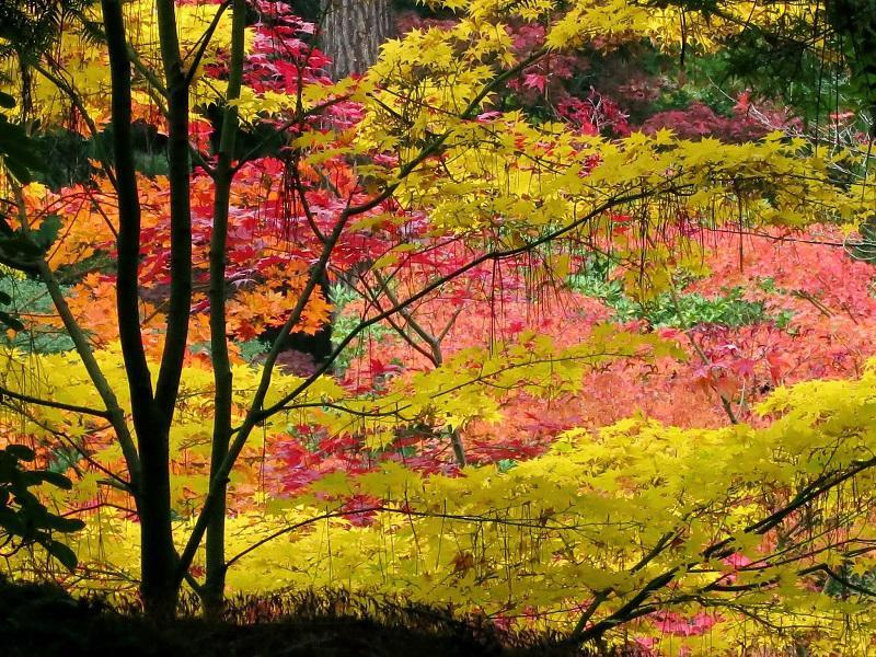 Seattle Japanese Garden Fall