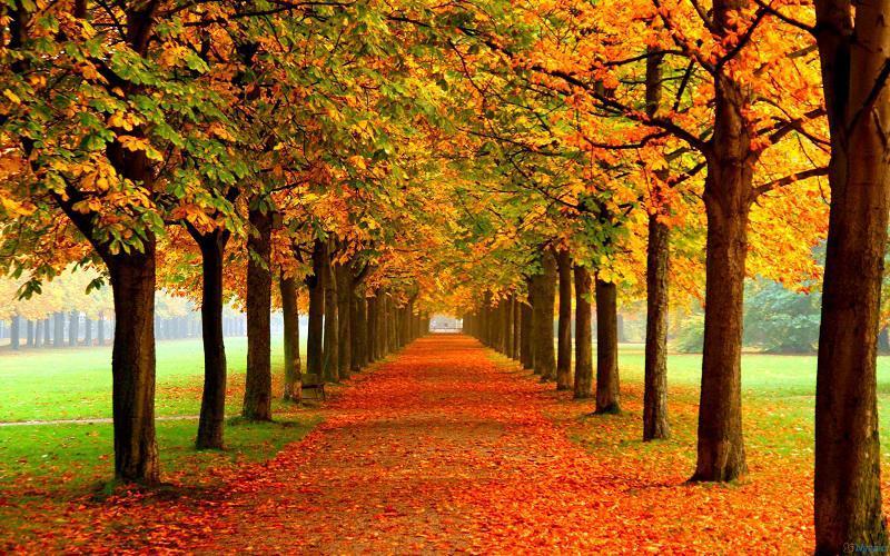 Autumn Tree Grove