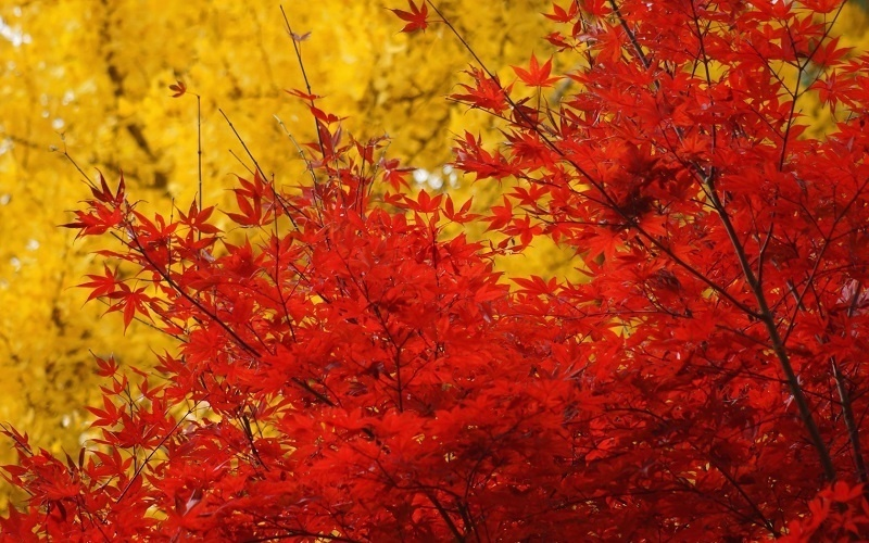 Colorful Fall Photos Vibrant Leaves