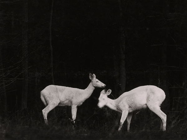 First Wildlife Deer