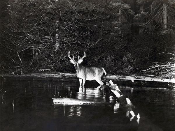 First Wildlife Lake