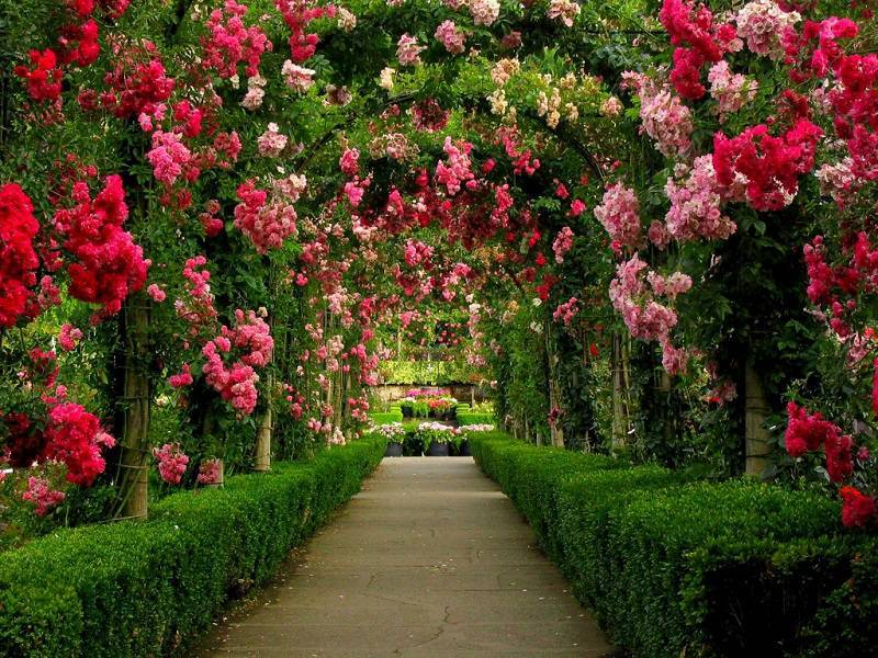 Rose Walkway in Canada