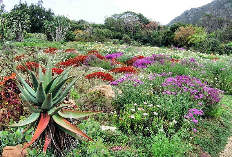 Kirstenbosch Gardens Around the World