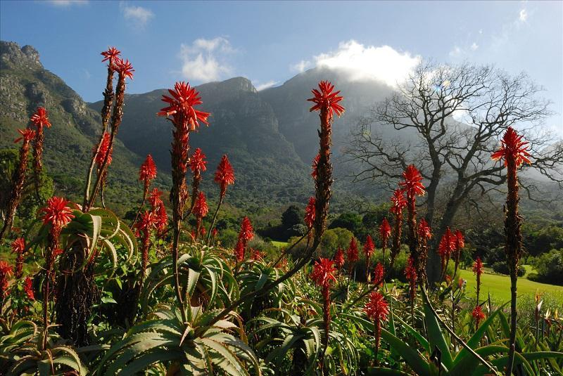 Kirstenbosch Garden in South Africa