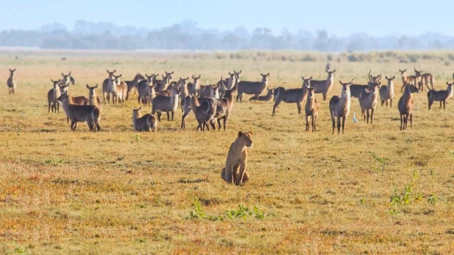 Gorongosa Wildlife