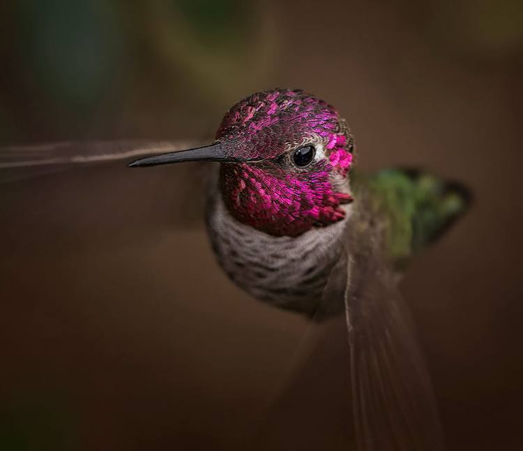Up Close Hummingbirds