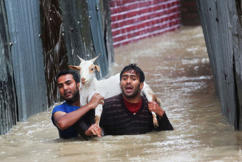 India Pakistan Floods Goat
