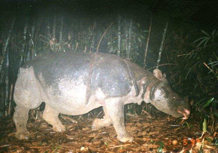 Rhino Camera